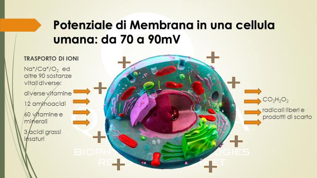 potenziale_di_membrana